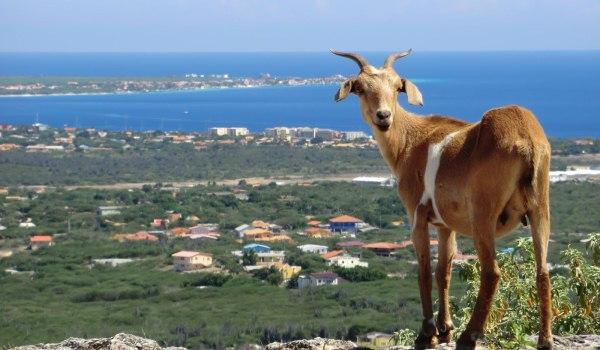 Slide4 600x350 Bonaire overzicht