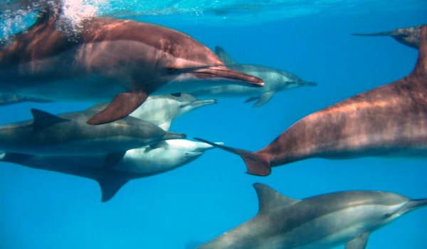 Slide6 600x350 Duiken-Dolfijn