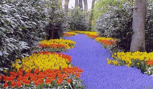 Keukenhof bloementour vele reizen en vakantie voor gehandicapten - Jardines de tulipanes en holanda ...