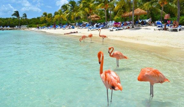 Slide2 600x350 Aruba-flamingo's op strand