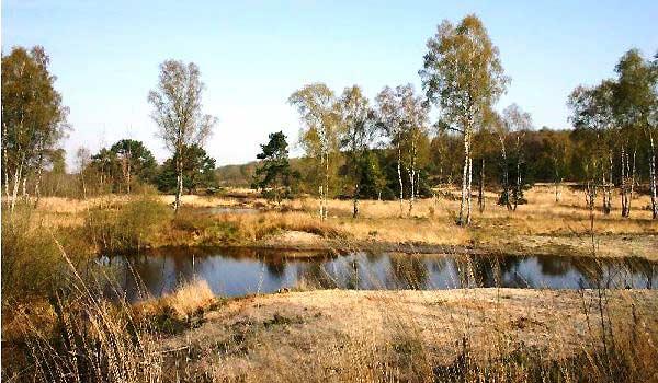 Slide3 600x350-Boshotel-natuur