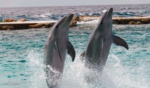 600x350-Curacao-dolfeinen-